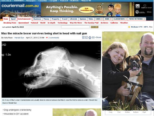 Detalhe do raio-x da cabeça de Max. Ao lado, o cão posa com seus donos em Melbourne, na Austrália