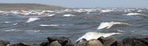 Mancha de petróleo atinge o litoral de estado dos EUA (Mancha de petróleo atinge o litoral de estado dos EUA (AP))