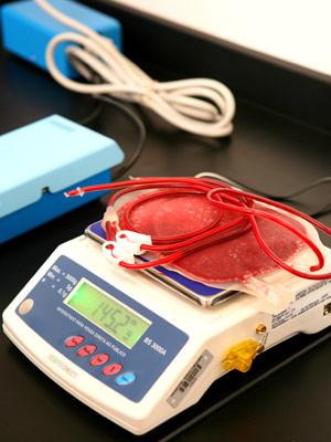 Depois de coletado, sangue passa por exames para garantir a qualidade das células-tronco.