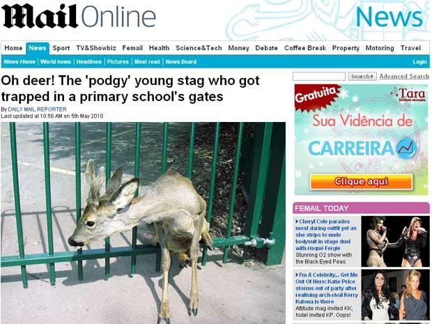 Veado 'ficou envergonhado 'por não passar por grade, afirmou inspetora de escola