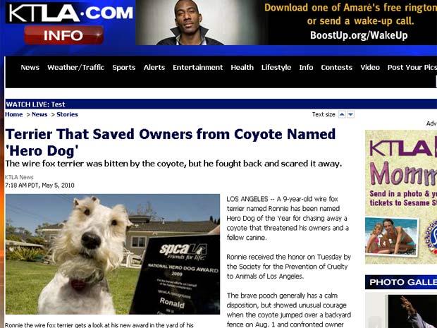 Fox terrier 'Ronnie' foi escolhido o cão herói de 2009.