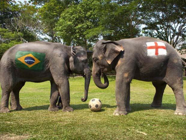 O elefante chamado 'Duanpen' teve pintado em seu corpo a bandeira da Inglaterra, enquanto a fêmea 'Thongsri' foi escolhida para defender as cores do Brasil.