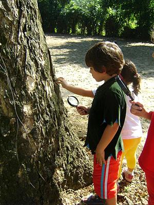 No Bichinho do Mato - Espaço de Brincar, crianças aprendem sobre as árvores.