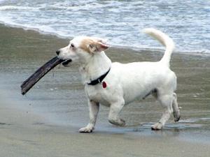 Paco foi encontrado em praia no México.