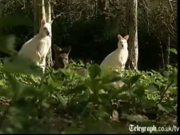 Animais são excelentes jardineiros. Eles se alimentam de grama