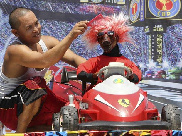 Porco assado é caracterizado como piloto de automobilismo.
