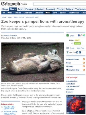 Leões são mimados no zoo da cidade de Devon