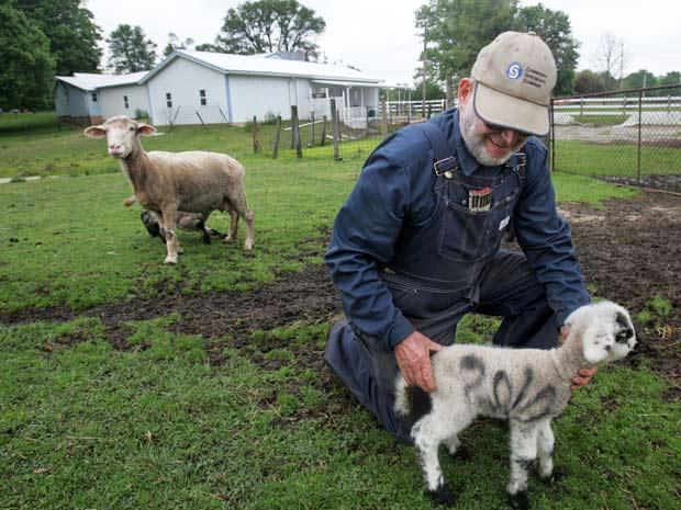 Cordeiros apareceram pichados em Ohio.