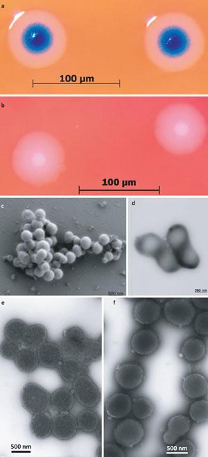 Etapas do experimento, publicadas em artigo na Science Express