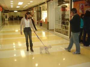 Cachorro em Shopping