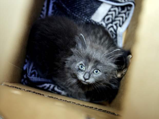 Membros da Sociedade para a Prevenção da Crueldade contra os Animais de Los Angeles (EUA) resgataram 30 gatos de uma casa na sexta-feira (21).