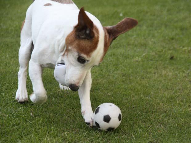 Segundo o proprietário do animal, 'Jack' sabe driblar e cabecear.
