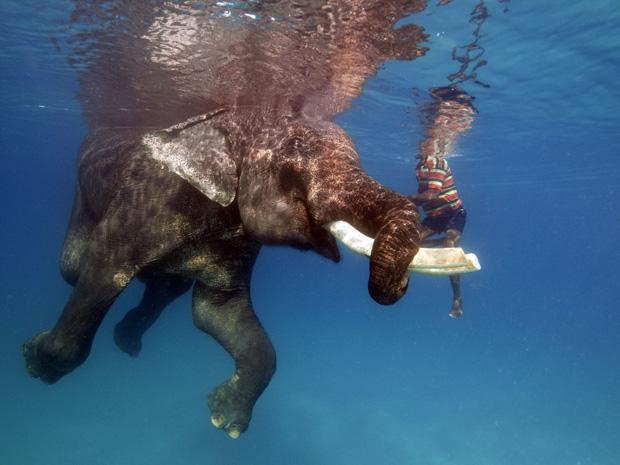 """Famosos por sua habilidade no """"nado sincronizado"""", Nasru, um domador de elefantes de 58 anos, equilibra-se sobre as presas de Rajan, um elefante de 60 anos, na costa da Ilha Havelock, no Oceano Índico."""