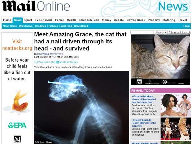 Amazing Grace foi encontrado vivo, andando com o prego na cabeça
