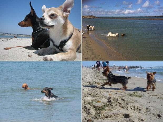 Animais aproveitam verão na Praia para Cachorros, em San Diego