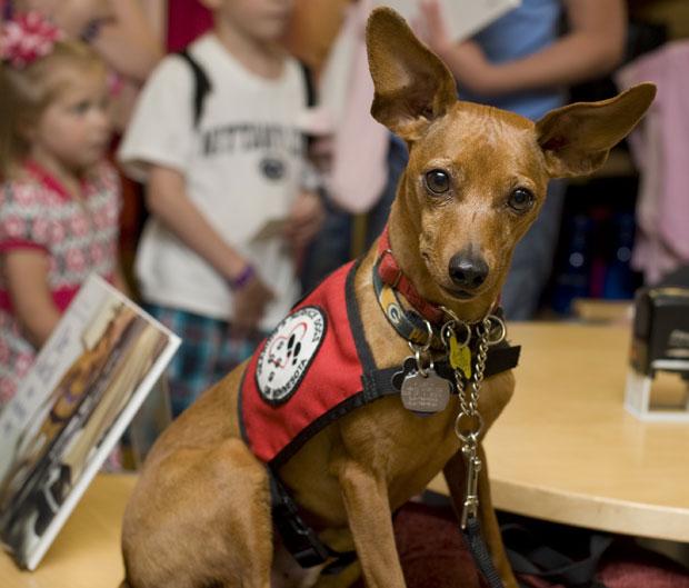 Jack, cão-terapeuta que atende na Clínica Mayo, nos EUA