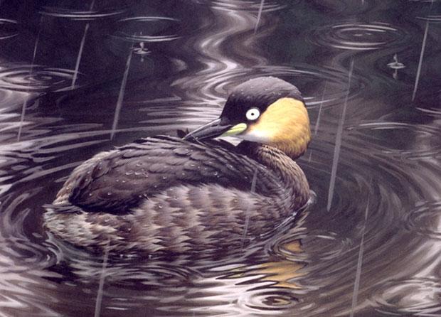 Ilustração retrata a ave, declarada extinta nesta semana
