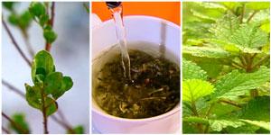 Veja a lista de plantas medicinais do programa (Reprodução)
