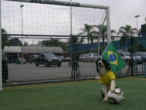 Cão 'Fenômeno' vai para a Copa