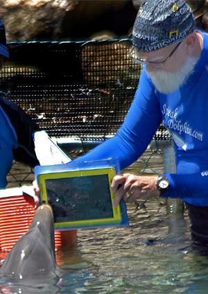 Golfinho usa iPad para se comunicar com humanos, diz pesquisador Golfinho_300_400