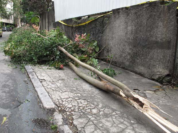 arvore caída Rua Lopes Quintas