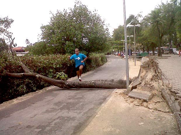 Árvore tomba e bloqueia passagem de pedestres em ciclovia na Lagoa Rodrigo de Freitas