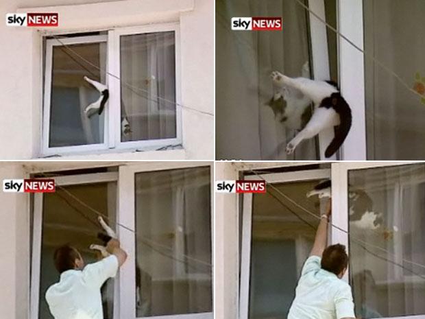Gato tentou se livrar da enrascada, mas foi salvo por pedestre.