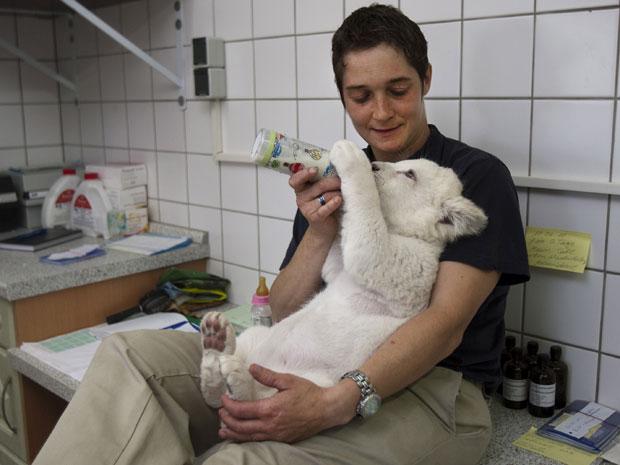 Jeannette Wurms amamenta um dos filhotes