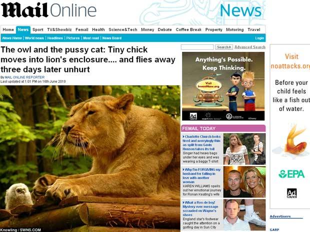 Coruja encara os leões em jaula na Inglaterra