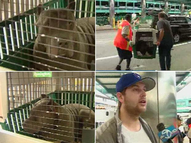 Nina foi capturada e entregue ao dono em aeroporto de Nova York