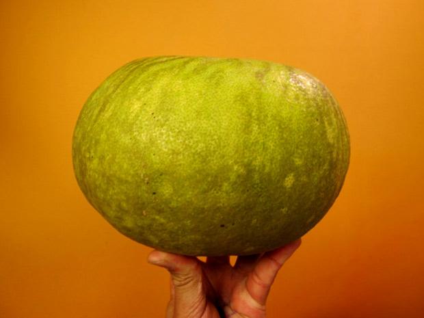 Pomelo pesa dois quilos e pode ter até 5 centímetros de largura. Fruta é típica da Ásia e muito usada na indústria farmacêutica e cosmética
