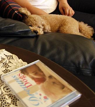 Poodle relaxa ao som de CD feito especialmente para cães.