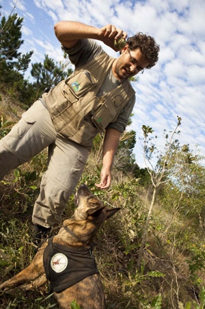 Quer a bolinha? Então, fetch! - Pedro Peres atiça Granada, mostrando a bola de tênis que a cadela vai ganhar no caso de conseguir encontrar fezes de veado