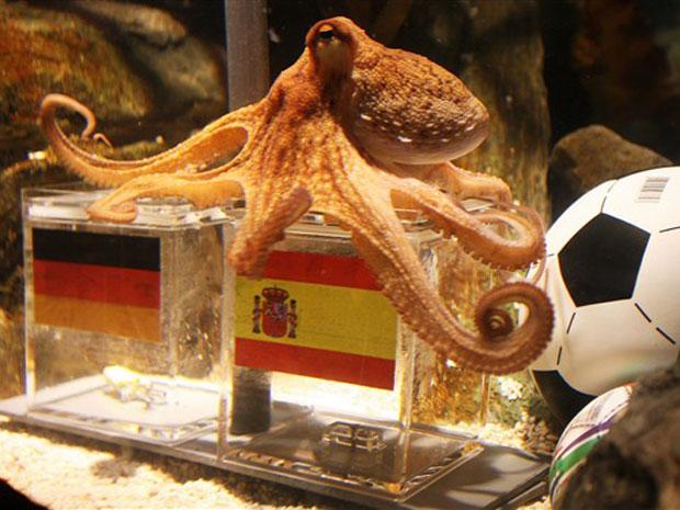 O polvo Paul foi parar na caixa com a bandeira da Espanha