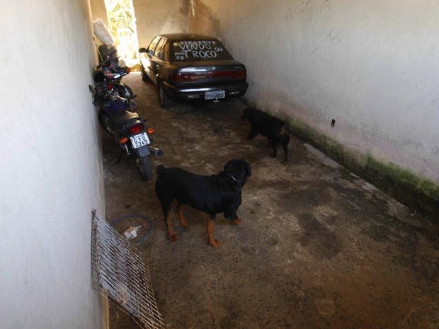 Polícia entra na casa em que estaria corpo de Eliza em MG e encontrar 11 cães Casa