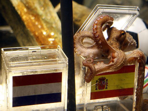 Polvo escolheu a isca na caixinha da Espanha