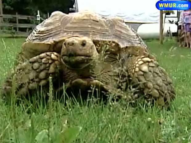 Tartaruga reapareceu após quatro anos.
