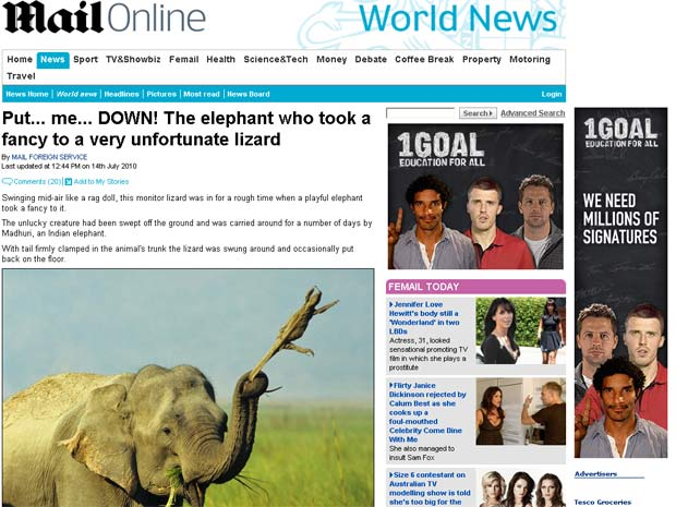 Elefanta captura lagarto com a tromba.