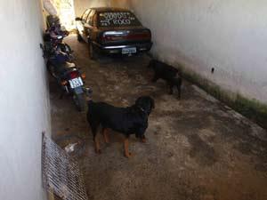Cão foi encontrado na casa do ex-policial Marcos Aparecido dos Santos
