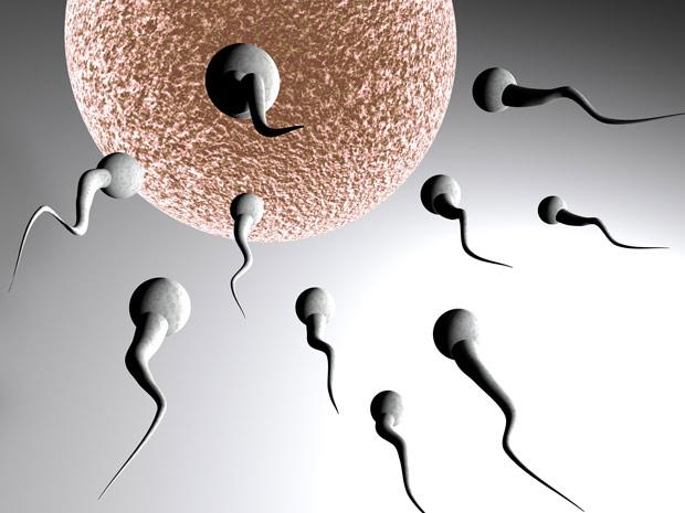 Gene específico responsável por produção de esperma em animais resistiu à evolução (Foto: Rodolfo Clix)