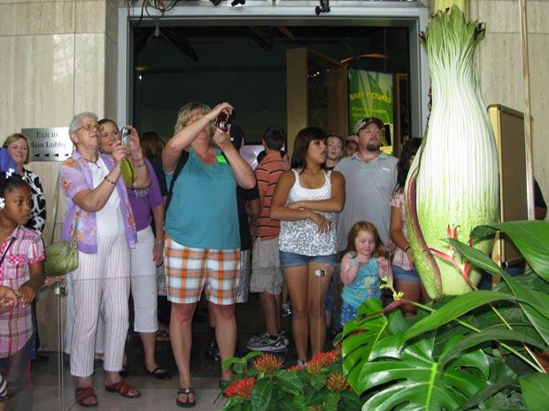 Visitantes observam exemplar raro de flor-cadáver, uma das maiores e mais malcheirosas do mundo, no Museu de História Natural de Houston, nos EUA