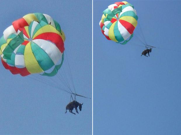 Burro foi lançado no céu da praia de Golubitskaya