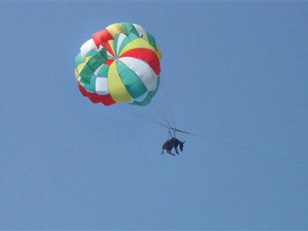 Animal foi atração no sul da Rússia
