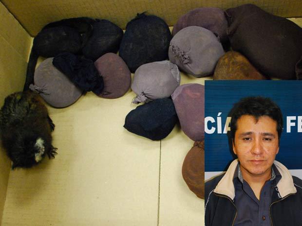 Homem foi detido com 18 micos escondidos em uma faixa presa ao corpo.
