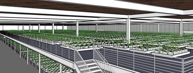 Desenho da empresa Gropech mostra projeto para cultivo e  processamento industrial de maconha para usos médicos na cidade de  Oakland.