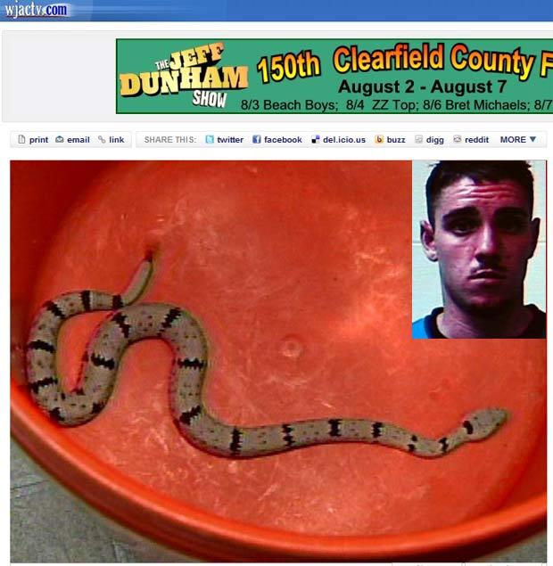 Jovem foi picado por cobras que havia roubado.