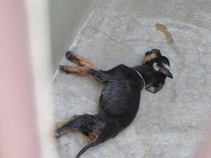 Um dos cães morreu nesta sexta-feira, em Belo Horizonte