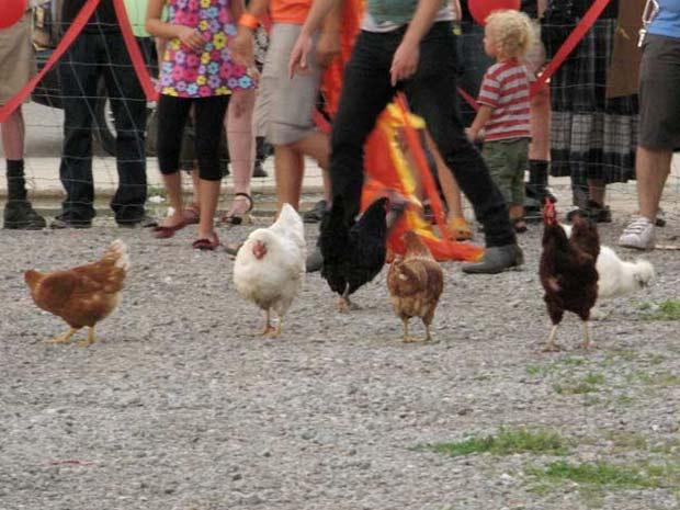 Detroit promoveu no domingo uma corrida de galinhas.