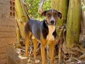 Cachorro que percorreu 60 km para voltar ao antigo lar
