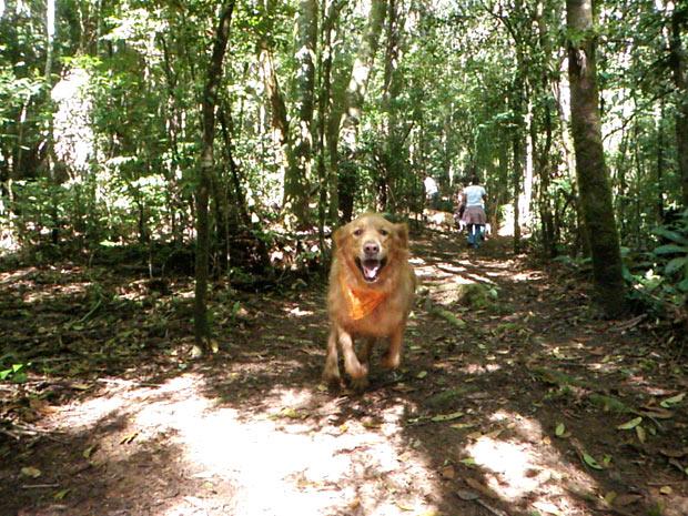 Cão corre em trilha durante edição anterior do evento